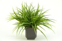 Green Grasses Plant Image 14