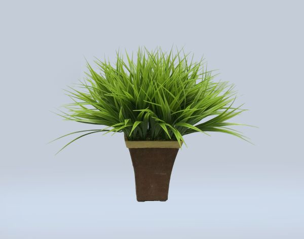 "14"" Vanilla Grass in Wooden Container"
