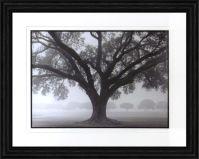 Silhouette Oak Framed Artwork Image 463