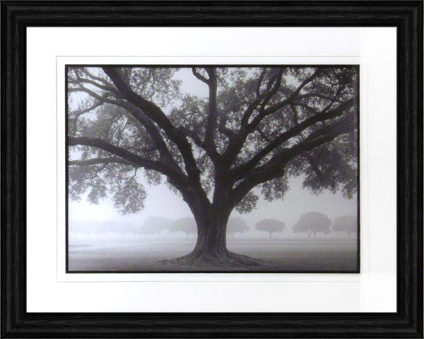 Silhouette Oak Artwork