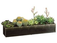 Long Succulent Arrangement Image 60